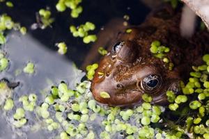 "2happy. ""Frog"". Stockvault.net."